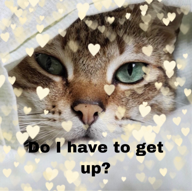 #relatable. #kittylove. #me in the mornings. #check out my friends account @harrypottetlover2020