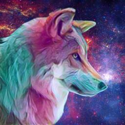 galaxywolf galaxy wolf wolfart spaceart space galaxyedit