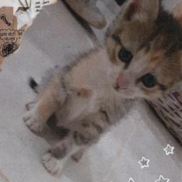 freetoedit cat cats fotoedit star