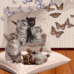 freetoedit myedit madewithpicsart pillows cats ircdesignapillow