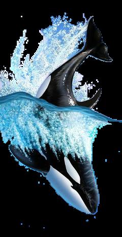 fish dolphin water freetoedit fstickers ocean beach