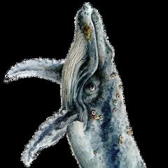 whale fish freetoedit fstickers ocean marine beach