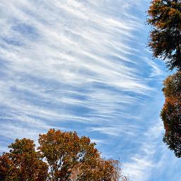 naturephotography outdoorphotography interestingsky lookup skylovers freetoedit