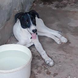perro perros dog dogs hermosa'💓 freetoedit hermosa pcmypetsbestportrait mypetsbestportrait