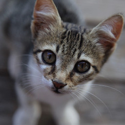 animalcrossing catsphotography