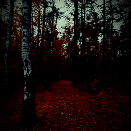 freetoeditforest