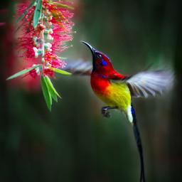 bird hummingbird powerofnature