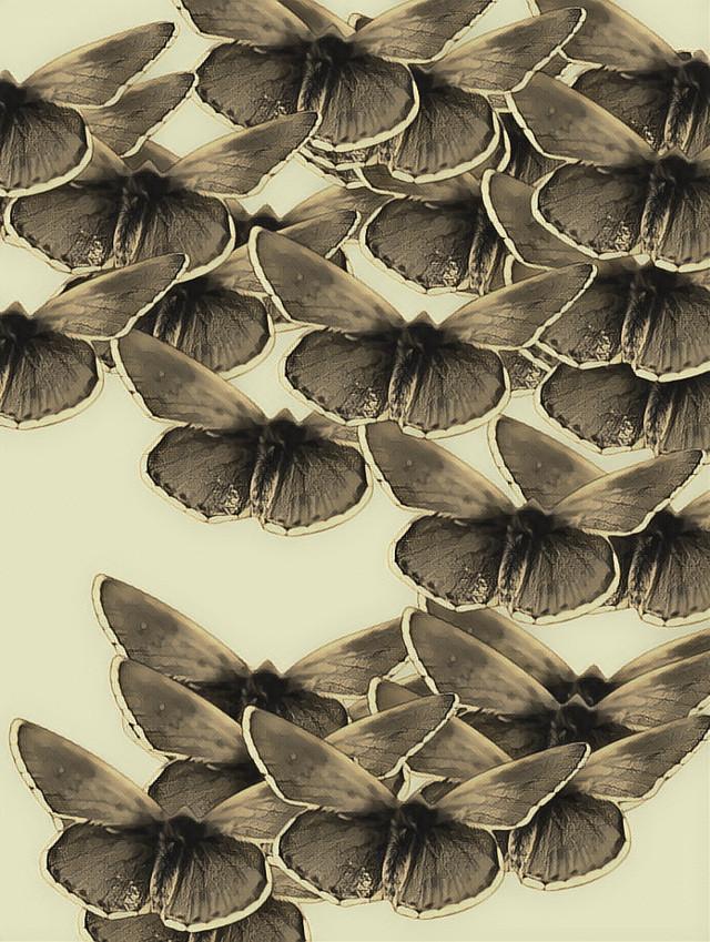 #moth