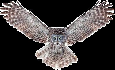 lechuza owl animal remixit fstickers freetoedit