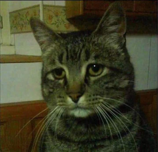 #cat mood