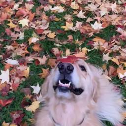 bestdog