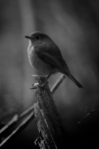 Hello little friend 😁🖤  #photography #monochrome #bird #cute #randomclick #picsartedit #picsartforfun