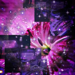 glowing surreal flower purple aesthetic maroon pink lantern light magic background border sparkles blend shadow garden night neon fairy glitter stars plant lily love dark freetoedit