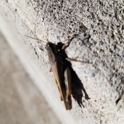 freetoedit grasshopper
