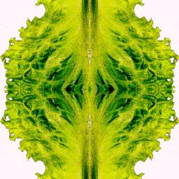 freetoedit design art vegetation lettuce
