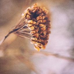 nature wildplants grassflower dried simplenature freetoedit