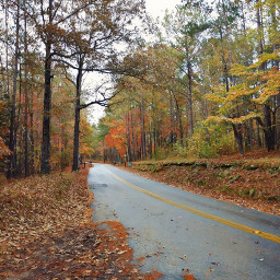 outdoors nature naturelover fall autumn autumnvibes fallleaves woods forest road colorful fallcolors trees leaves myphoto happiness happy november adventure adventuretime freetoedit