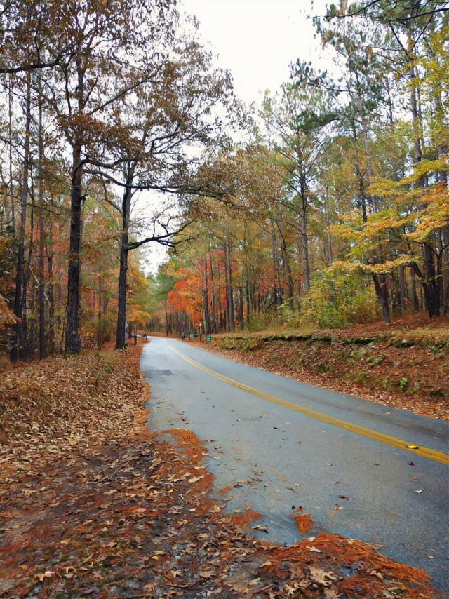 #outdoors #nature #naturelover #fall #autumn #autumnvibes #fallleaves #woods #forest #road #colorful #fallcolors #trees #leaves #myphoto #happiness #happy #november #adventure #adventuretime