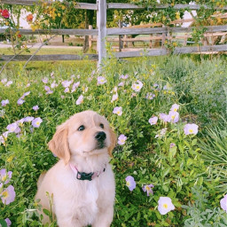 dog doggo doggies puppy puppur puppies flower garden flowers fluffy cute awww fence cutie nature