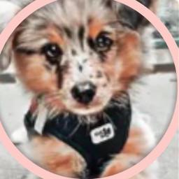 doggy dog cutedog doggie cute freetoedit