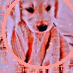 doggie doggy dog cute freetoedit