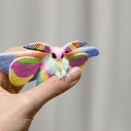 moth rainbow pastel