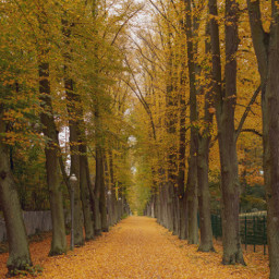 autumn fall street background backgrounds freetoedit