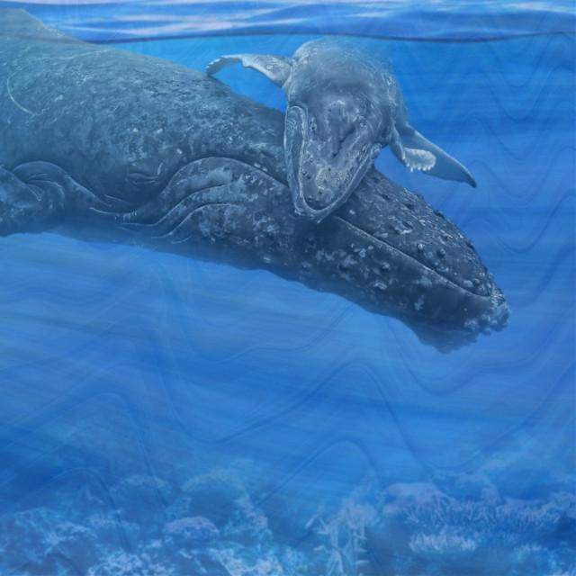 #whale #buckelwal #endangered #endangeredspecies #animal #underthesea #sealife