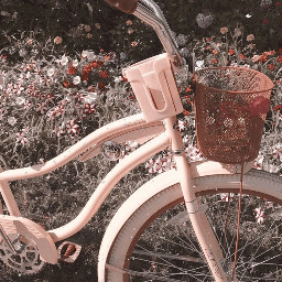 soft aesthetic background pic pastel pink bicycle basket flowers vintage nature aestheticpic lightpink prettycolor