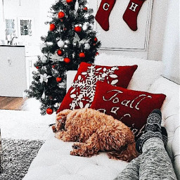 christmas dogs dog christmastree tree couch stockings christmasstockings pillow vsco tumblr aesthetic cute
