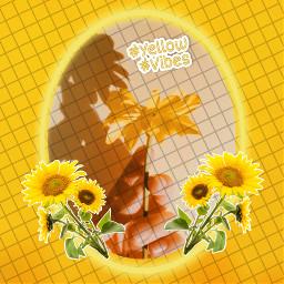 yellow yellowvibes aesthetic sunflower freetoedit rcyellowvibes