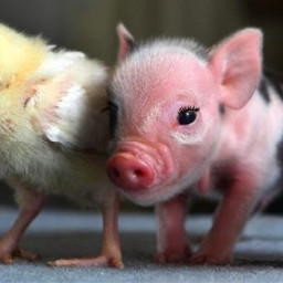 animalfriends freetoedit