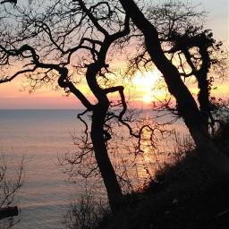 tree sunset sunsetsilhouette naturephotography sea