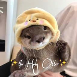 otters otterlove ottermeme ottergang ottersquad otterwithduckiehat duckie duckiehat theholyotter yellow brown grey
