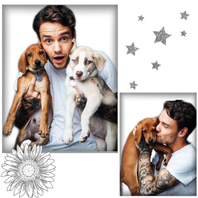 Liam with dogs ☺️☺️  ✰ #liampayne #james #liamjamespayne #aestgetic #dogs #idk