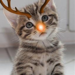 freetoedit gatotumblr tumblr happynewyear2021 cat kitty cute love edit editcat photo editphoto beautiful pretty christmas renna animais cutecat prettycat gatofofo fofo ameosanimais ilovecats ilovedogs srcholidayreindeer holidayreindeer