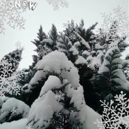 snow winterwonderland december snowflakes freetoedit srcsilversnowflakes silversnowflakes
