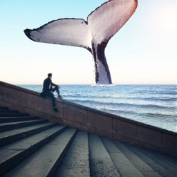 unsplash whale water freetoedit
