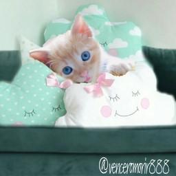 cat green blueeyes sweet freetoedit irccomfysofa