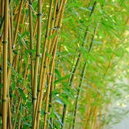 freetoedit nature retro myedit interesting cbbackground cbediting cbedits photography naturephotography freetoeditremix