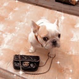 chanel west puppy beauty interesting freetoedit