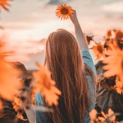 sunflowerlegend