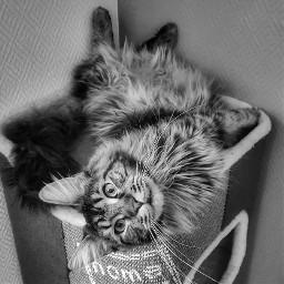 cat catgirl freetoedit