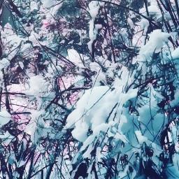 snow winter frozen freetoedit