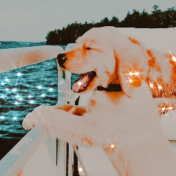 sunset lake vibes goldenretriever dogs aesthetic lakes water background photography