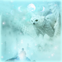 freetoedit fantasy surrealism winter owl screeneffect