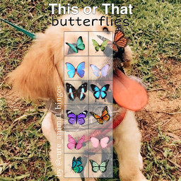 thisorthat butterflies thisorthatbutterflies cuteanimalbingos freetoedit