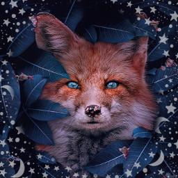 wolf freetoedit srcstarsandmoons starsandmoons