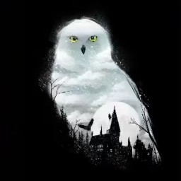 snowyowl hedwig beautiful harrypotter hp hogwarts home hogwartsschoolofwitchcraftandwizardry clever 🥺✨💕💕