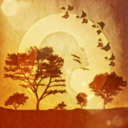 safari sunset butterflies africa africansunset freetoedit